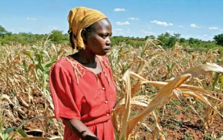Zimbabwe-to-eperience-drought