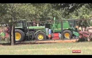 Drought conditions hammer maize farmers   eNCA
