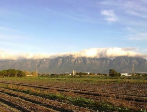 The Western Cape Premier and Mayor of Cape Town: We demand the long term protection of the Philippi Horticulture Area