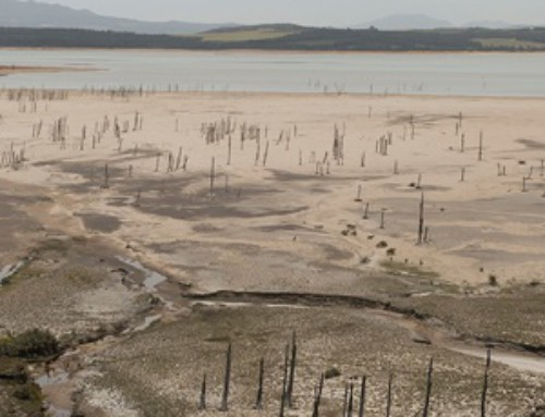 Western Cape declared disaster zone over drought | News24